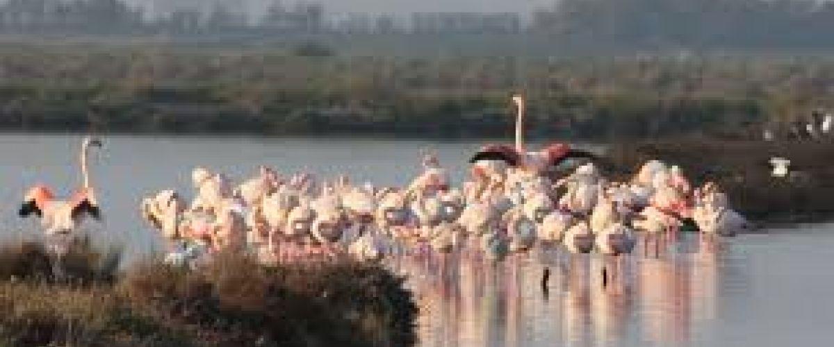 Parco Naturale Delta del Pò